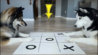 A Very Intense Game of Tic Tac Toe..