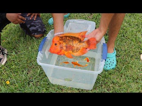 RARE Baby Aquarium Fish RESCUED From LANDOWNERS! (Cops CALLED)