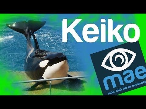 Keiko: su historia y ¿cómo murio?