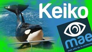 Keiko: su historia y ¿cómo murio? KEIKO 検索動画 25