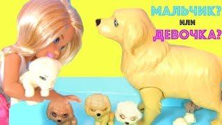 BARBIE Барби PUPPIES Кукла Барби Мультик Color Change  Играем в Куклы Барби  Видео для Детей