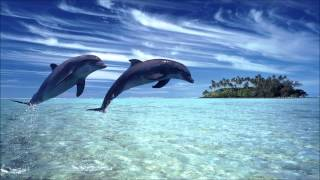 Dolphin Meditation Full HD - The Most Beautiful Relaxing Music Ever HQ (Part 1)