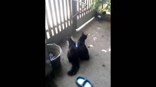 Дурные коты