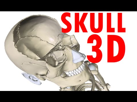 Skull Anatomy - Bones and Structures - Head Anatomy #1