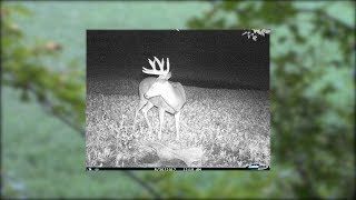"Big Wisconsin Buck Kill- ""Leonard""- Opening Weekend"