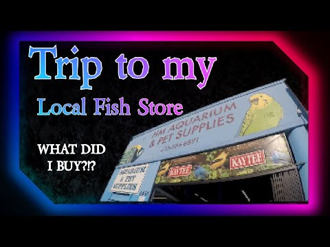 My Local Fish Store! The First Settlers #catchthisfishkeeper