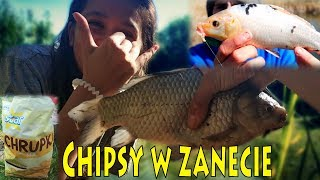 CHIPSY W ZANĘCIE - 7 gatunków ryb nad stawem i akcja spławik