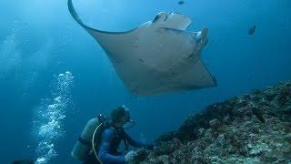 Подводный Мир Пхукет Underwater World Phuket(Подводный Мир Пхукет Underwater World Phuket Это видео создано с помощью видеоредактора YouTube (http://www.youtube.com/editor), 2014-01-29T13:48:32.000Z)