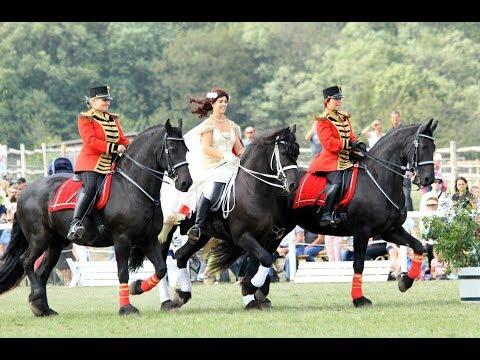 Pferdefest auf Schloss Hof ORF Niederösterreich Heute