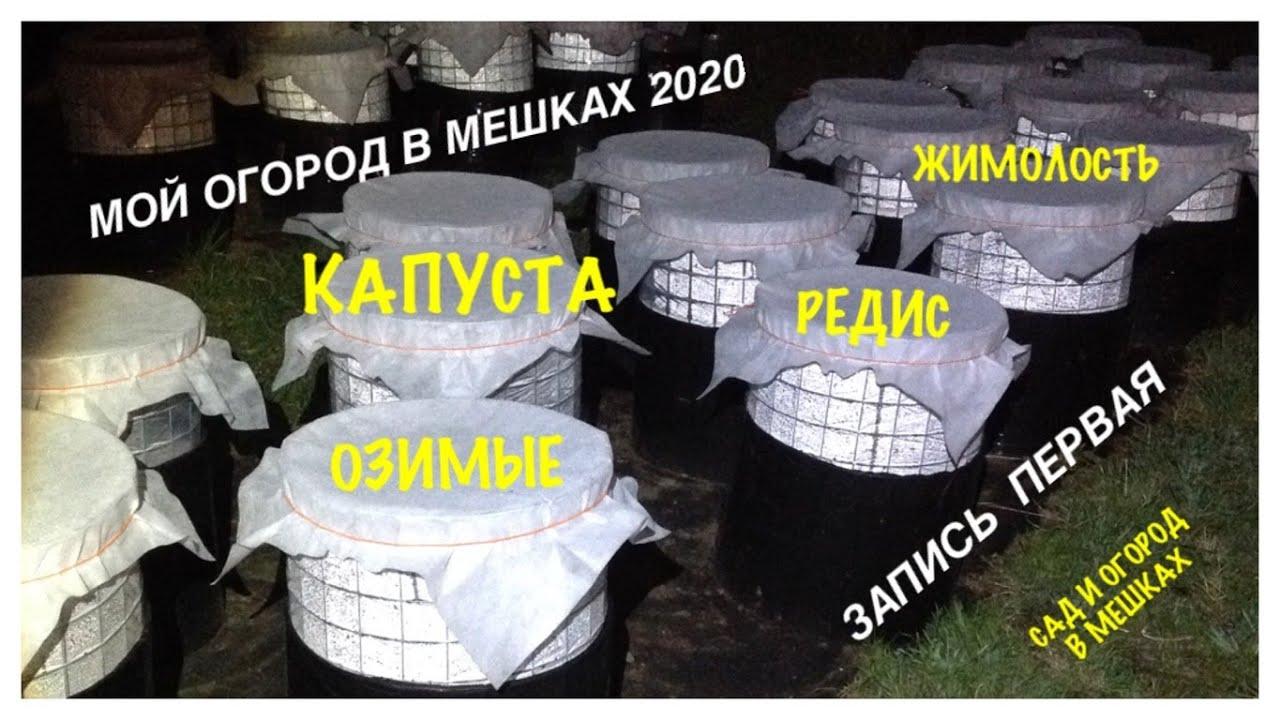 Мой ОГОРОД В МЕШКАХ 2020. Запись первая: Капуста, редис, озимые, жимолость. My GARDEN in BAGS 2020.