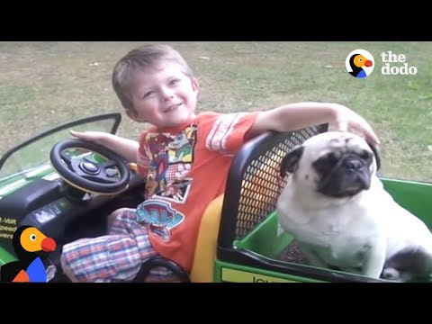 Boy And Pug Had The BEST Friendship | The Dodo