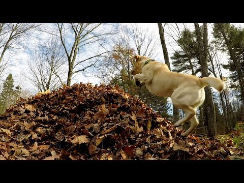 Stella's Best Leaf Jumps Of 2017 (in 60 Seconds)