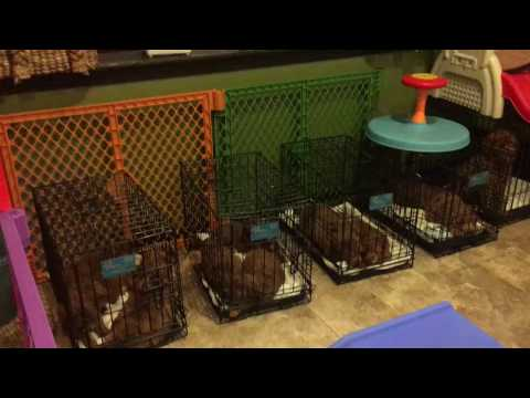 twixx-puppies-crate-training-hd