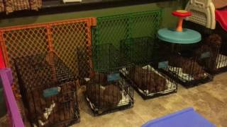 Twixx puppies crate training HD