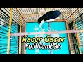Kacer Gacor Full Tembakan Suara Isian Cililin Nyecret(.mp3 .mp4) Mp3 - Mp4 Download