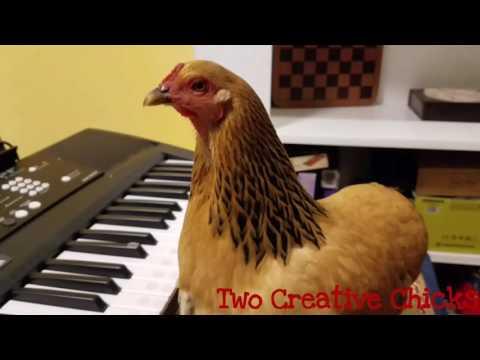 Patriotic Chicken Playing Keyboard Piano