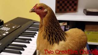 "Patriotic Chicken Playing ""America the Beautiful"" on Keyboard Piano"
