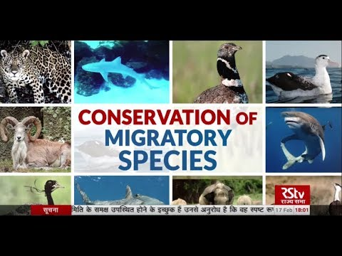 In Depth - Conservation Of Migratory Species