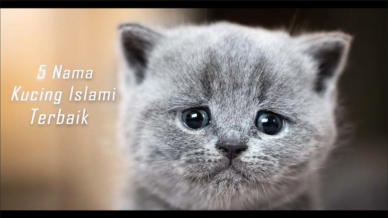 Nama Nama Kucing Islami Terbaik Video Kucing Lucu Youtube