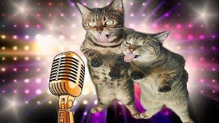 ПРИКОЛЫ 2019 ТОП СМЕШНЫХ ВИДЕО С КОТАМИ Смешные животные Смешные кошки TOP FUNNY PETS 4