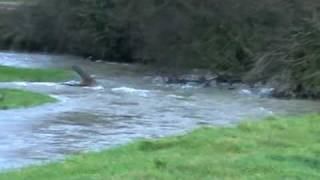 New Holland Tractor + Further Flooding at Dryslwyn