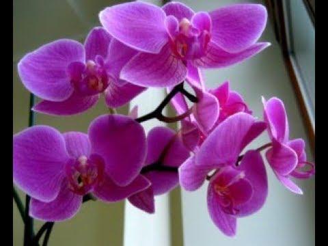 Заказ AVON 4 каталог/ Запах орхидеи/ 2 Подарка за деньги/ Планета SPA/ Ольга STR