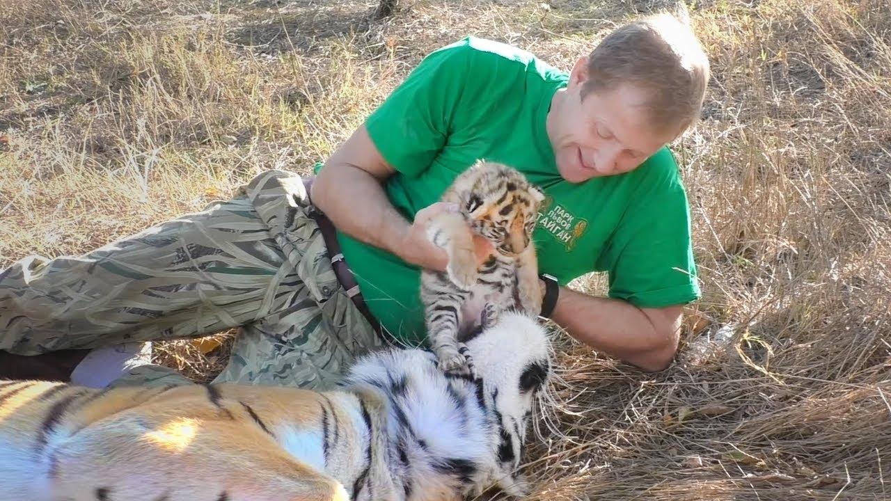 Человек и Тигр. Тигрята открыли глазки. Тайган. Tiger cubs opened eyes. Friendship man and tiger