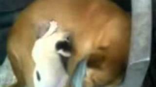 cat drink dog milk.3GP