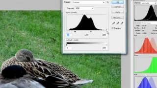 Photoshop - Levels And Histogram