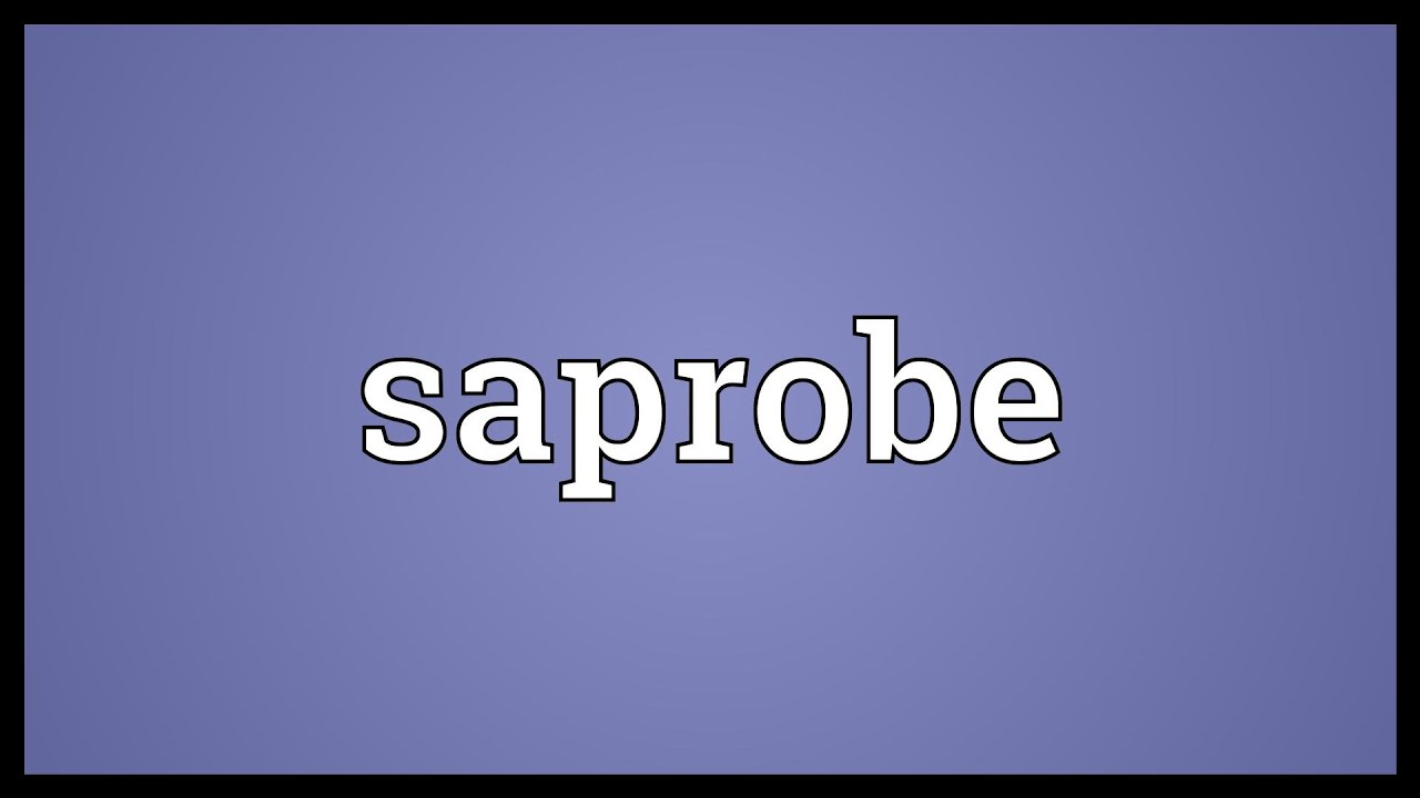What is a saprobe