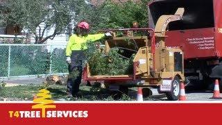 Qualified Melbourne Arborist  |  T4 Tree Services