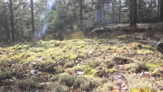 Svartskog - en dag i mai