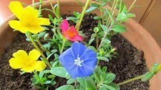 3 Plantas De Pequeno Porte