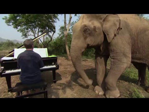 Chris Matthews - Concert Pianist gets bored performing for humans… Plays for Blind Elephants