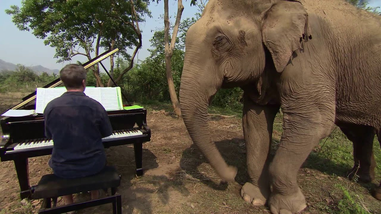 Music For Elephants Trailer Youtube