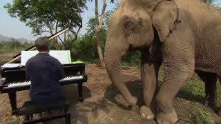 Music for Elephants - Trailer