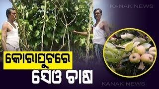 A Man's Experiment Turns Koraput Into Apple Orchard Even In 40 Degree Celsius