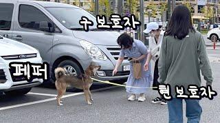 해외 입양 후 2년, 한국에서 다시 만난 페퍼(구, 꼬…