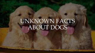 unknown-facts-about-dogs