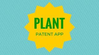 anmeldung von patent
