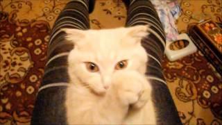 У кота выпал зуб))).wmv