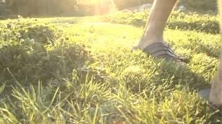 видео Как посадить газон своими руками: подробное руководство