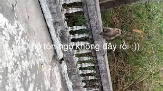 Chọc khỉ bị khỉ rượt chạy té khói :))( Troll monkey be monkey bite)