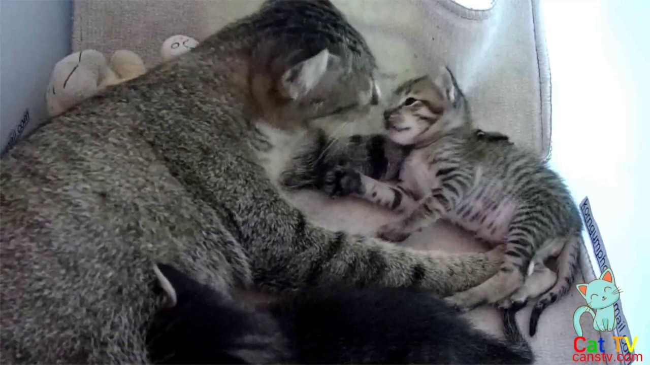 How Long Do Kittens Need to Have Their Mother s Milk