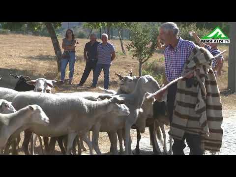 Tradicional Romaria do Gado em Linhares da Beira