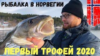 Рыбалка в Норвегии с берега Трофей 2020 взят Я полчаса боролся с этой треской Норвегия Рыбалка