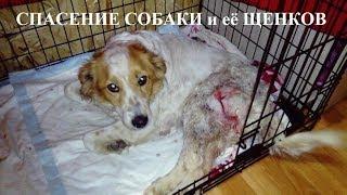 Спасение собаки и её щенков.