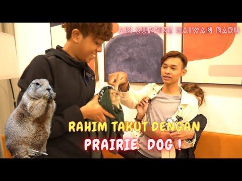 Download AM SUPRISED HAIWAN BARU PRAIRIE DOG & ARNAB  !! - RAHIM TAKUT NAK PEGANG !!
