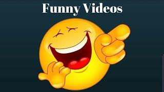 funny video for WhatsApp status