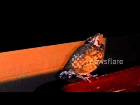 Bird found frozen in Fear